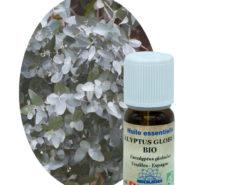 Huile essentielle Eucalyptus globuleux BIO