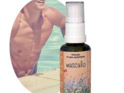 Musculo Mélange d'huiles essentielles Douleurs Musculaires
