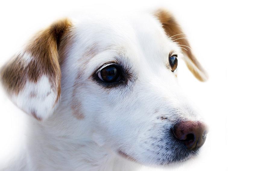 Préparation oligoéléments vétérinaires Oligovital